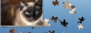 cat puzzle