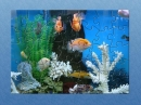HTBMF Aquarium Puzzle