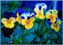 AG Pansies Puzzle