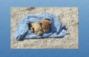 IP Dogs On Mexican Beach Puzzle