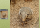 Armadillo Jigsaw Puzzle
