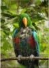 EST Parrot Puzzle