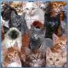 AG Kitty Cats Puzzle