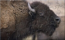 HWDN Bison Puzzle