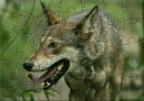 YBN Red Wolf Puzzle