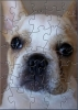 CWA Dog Puzzle