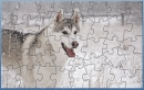 CA Dog Puzzle