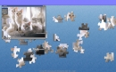 Nice Cats Puzzle