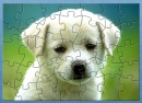 BCBA Cute Puppy Jigsaw