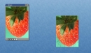 MGFIL Strawberry Puzzle