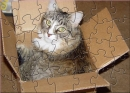 FPA Kitty In A Box