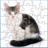 Nice Cat Puzzle