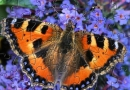 GHB Beautiful Butterfly Puzzle