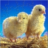 Nice Chicks Puzzle