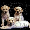 Cute Puppies Puzzle