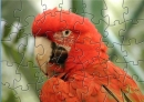 Cockatoo Puzzle