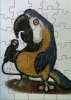 PuzzleBird