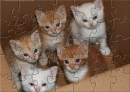A Cute Kittens in a Box Puzzle