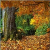 Beautiful Nature Puzzle