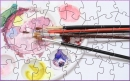 DPF Palette Puzzle