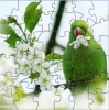 australian parrot puzzle