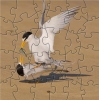 beuatifull bird puzzle