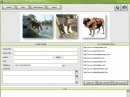 Dog Life Jacket Guid  article Submitter