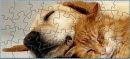Cat Weds Dog Puzzel